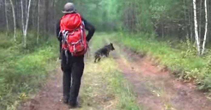 Todos pensaban que la pequena de 11 anos habia muerto luego bosque perro banner