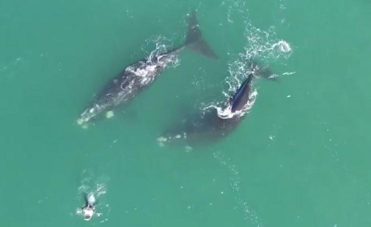 Unos surfistas vieron dos ballenas y se acercaron nerviosos, pero tuvieron la mejor experiencia de sus vidas
