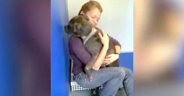 Ciego y maltratado, este pobre pitbull por fin encuentra el amor en un hogar definitivo