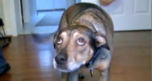 Cuando este perro se dio cuenta de que el bebé no respiraba, decidió hacer algo extraordinario