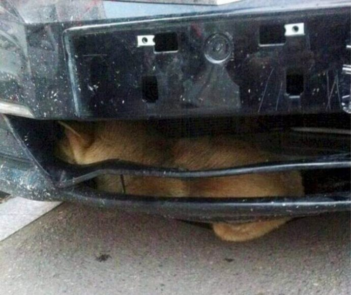 Después de conducir más de 300 kilómetros, escuchó un ruido que salía de la parte delantera de su vehículo...