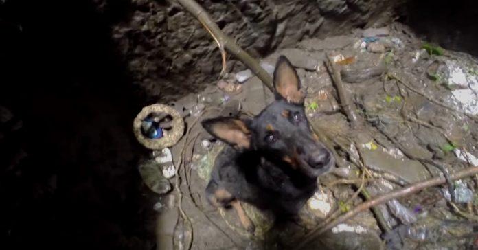 dog hole2