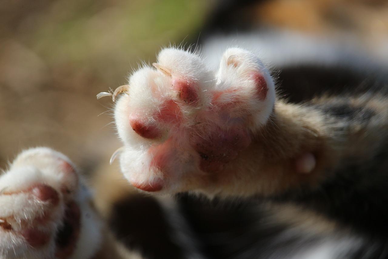 cat paw photo