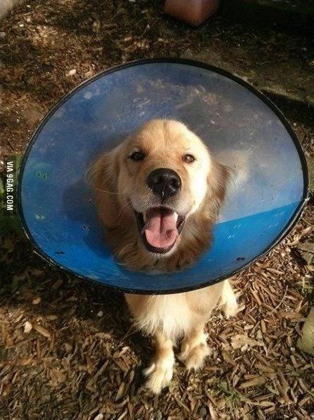 El apasionante final feliz de este adorable Golden Retriever llamado Bran te encantará