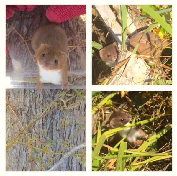 Encontraron a esta criaturita abandonada a un lado de la carretera ¿Sabes qué animal es?