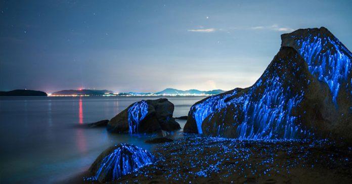 estas increibles criaturas transforman las rocas de esta playa en piezas de fantasia banner