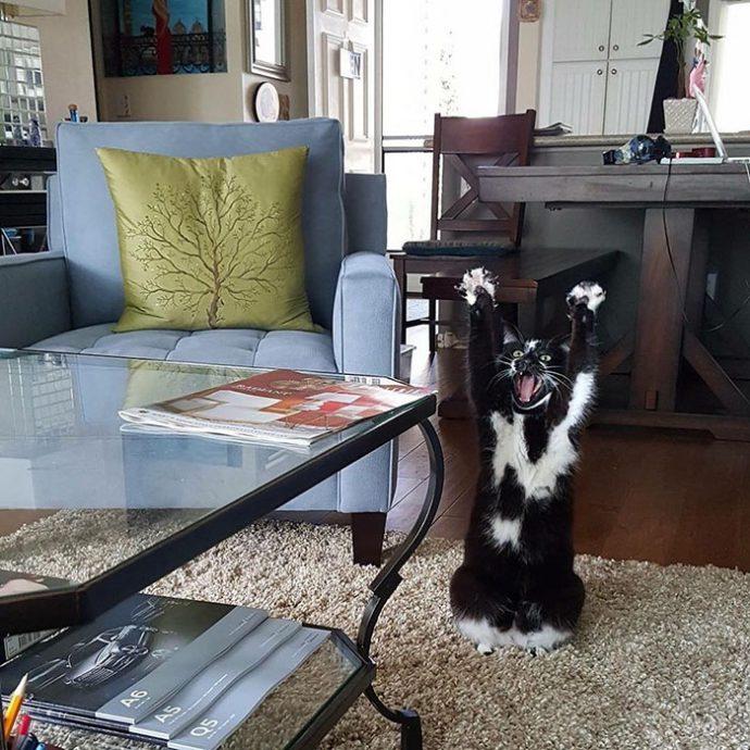 Este curioso gato tiene una costumbre muy particular que se ha vuelto viral. ¡Y nadie sabe por qué!