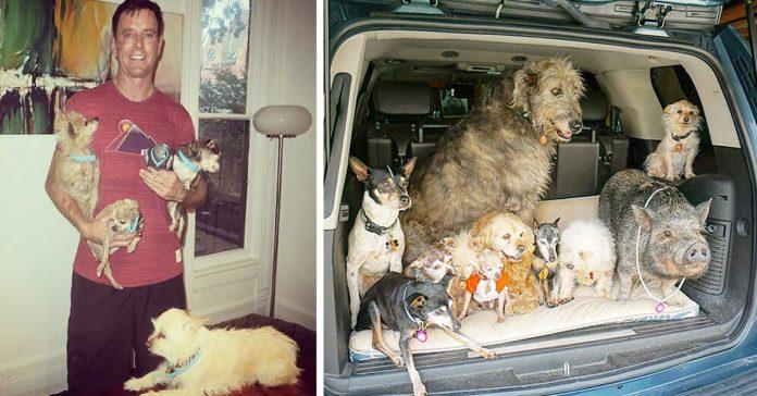 este hombre ha dedicado su vida a adoptar perros que ya no pueden encontrar un hogar banner2