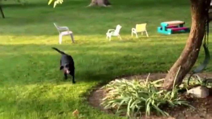 Los niños se estaban escondiendo bajo la piscina ¡Pero mira lo que hace su perro cuando los descubre!