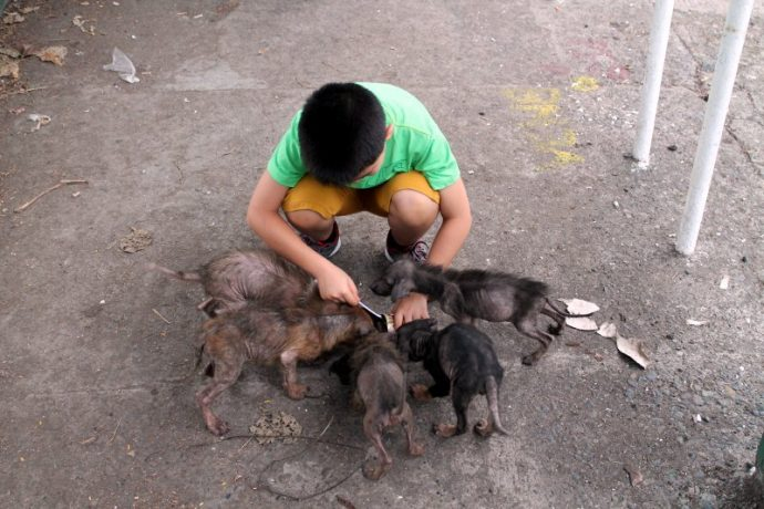 """6 """"ratillas"""" gigantes cambian radicalmente tras ser encontradas por un niño pequeño detrás de una Iglesia"""