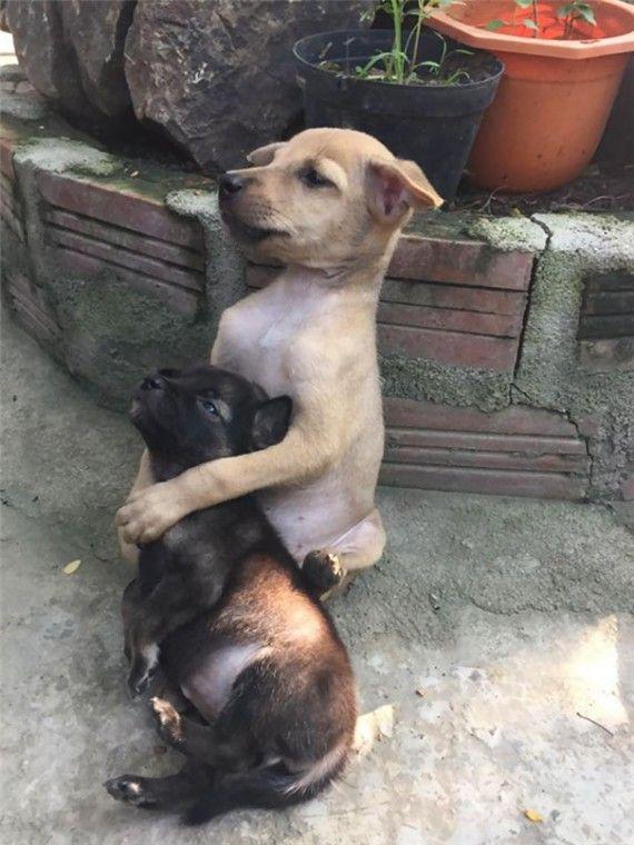Estos cachorritos abandonados no pueden parar de abrazarse, ni siquiera cuando finalmente los adoptaron