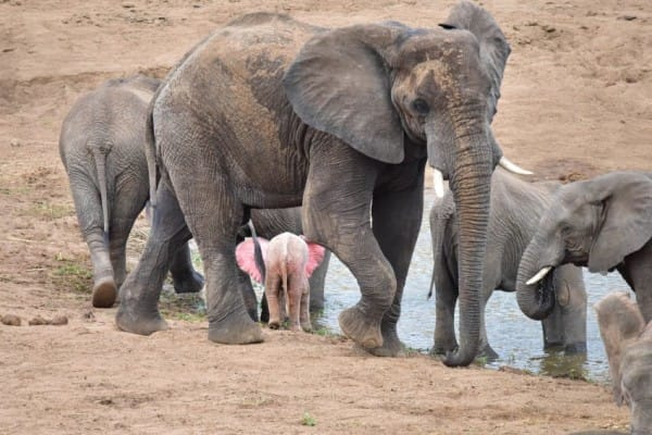 13 Increíbles animales rosas capturados por los mejores fotógrafos de naturaleza