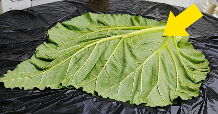 ideas transformar hojas jardin cemento