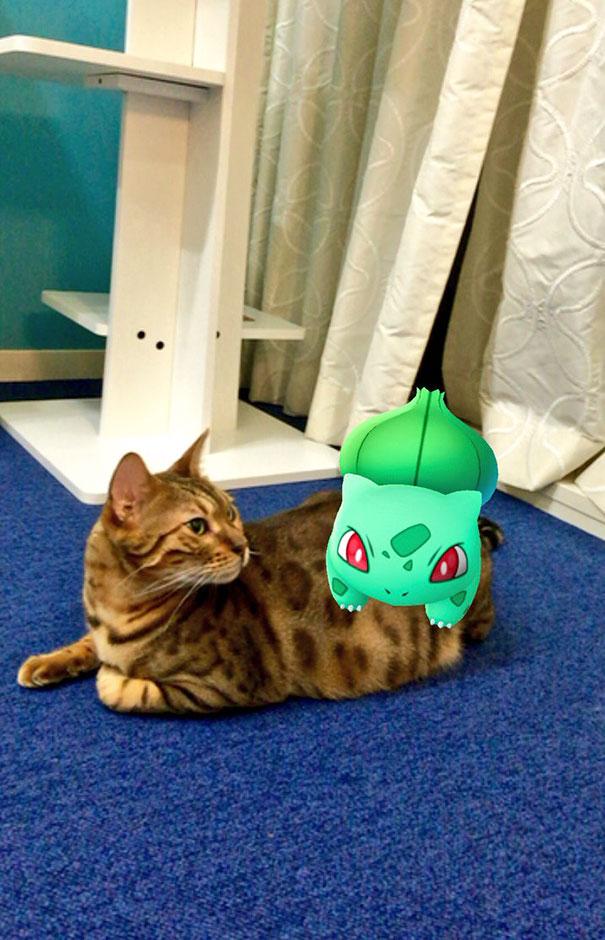 Las mascotas de todo el mundo pueden ver a los nuevos Pokémon, y la evidencia es más que convincente