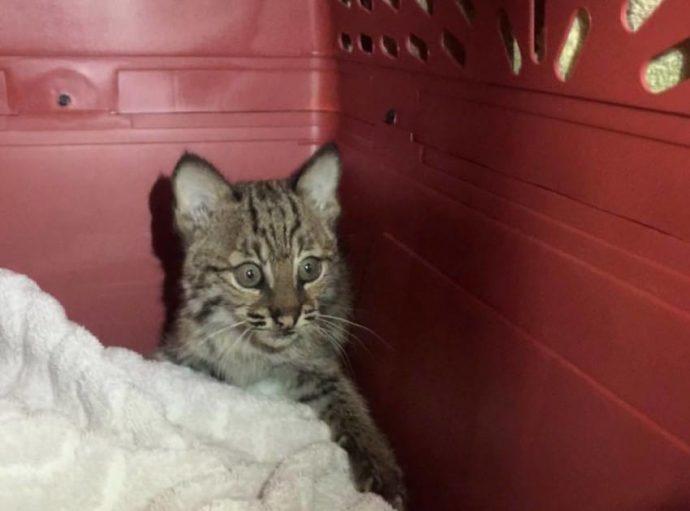 """Encontró a este """"gatito"""" en la carretera, pero pronto descubrió que no era lo que creía..."""