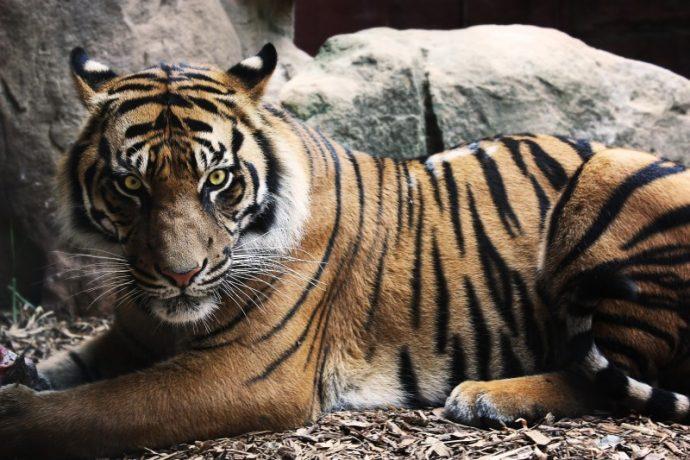 Los 20 animales más mortíferos que acaban con más humanos cada año