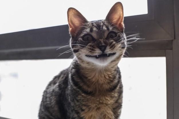 21 Increíbles datos sobre los gatos que harán que te arrodilles ante ellos