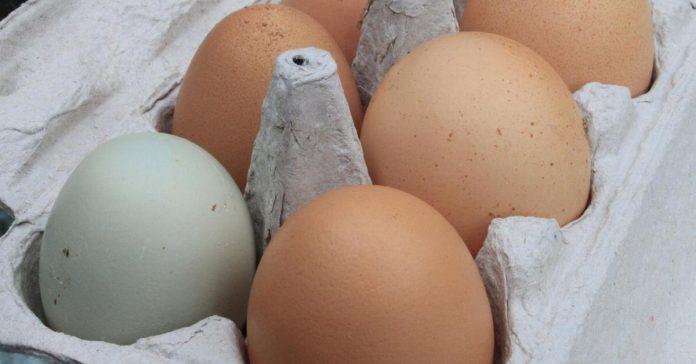 maneras singulares de reciclar los cartones de huevos banner