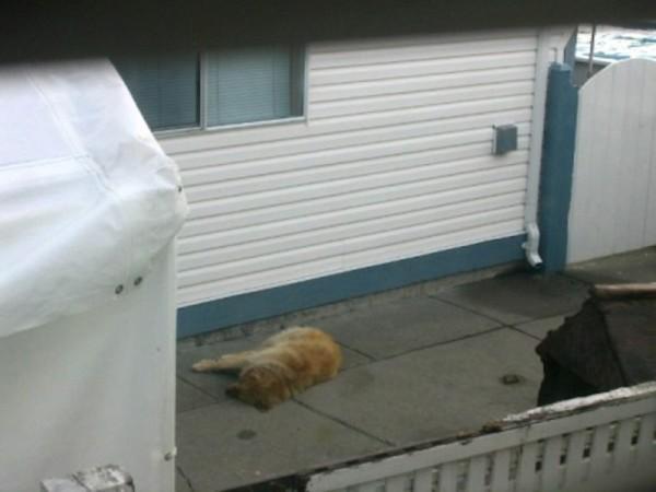 Nadie hacía nada para ayudar a este pobre animal. Así que decidieron saltar la valla ellos mismos y actuar