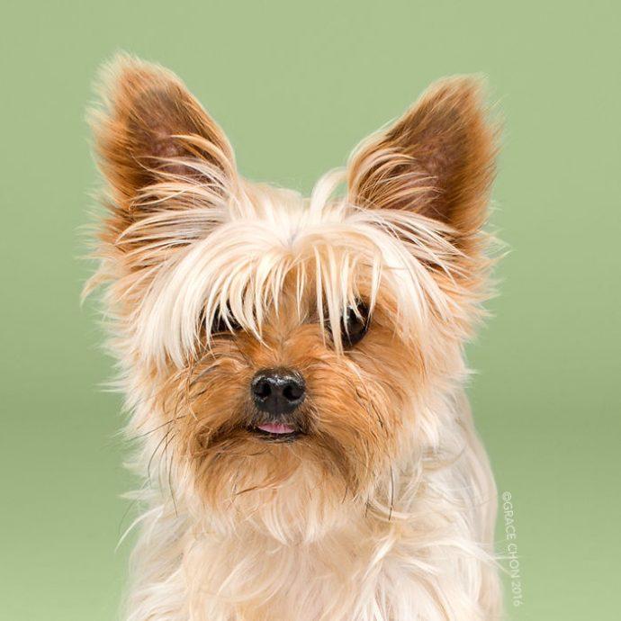 20 Divertidas imágenes de cachorritos antes y después de cortarse el pelo