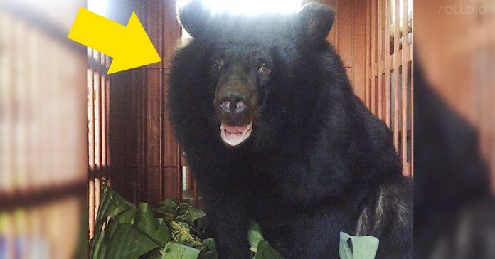 oso negro hotel maltratado