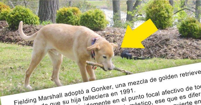 perro recorre cientos de kilometros para reunirse con su familia