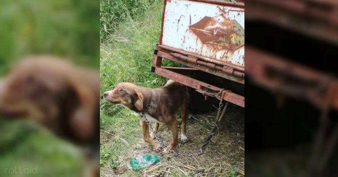 perro rescatado encadenado 10 dias
