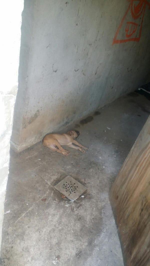 Un Pitbull guía a su dueño hasta descubrir un cachorro abandonado