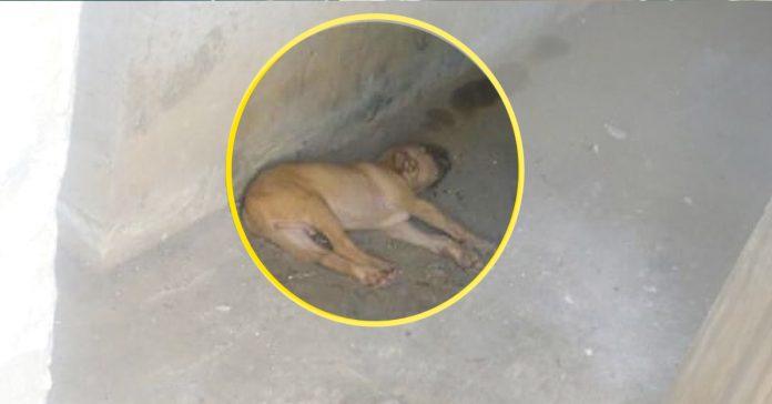 un pitbull guia a su dueno hasta descubrir un cachorro abandonado banner