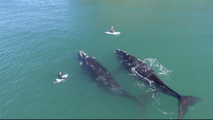 whales nz