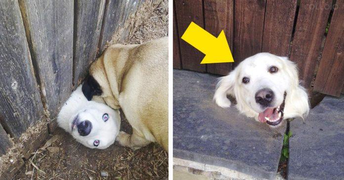 20 perros divertidos solo querian decir hola