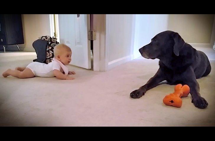 Un perro se viraliza al celebrar que un bebé empezase por fin a gatear