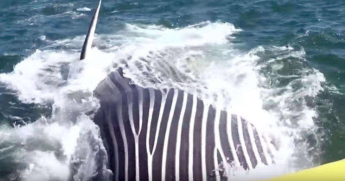 Unos marineros capturan la criatura de sus vidas cuando parecía que no iban a conseguir nada