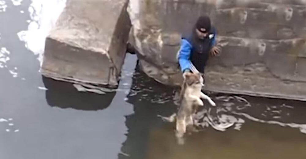 Un hombre se viraliza en un vídeo al saltar para salvar a un cachorro