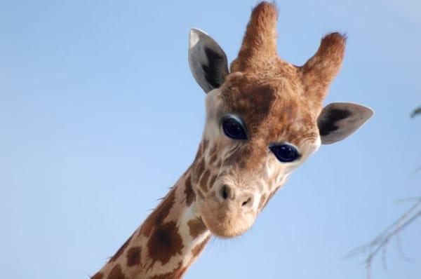 Cómo serían los animales si tuvieran los ojos en el frente de la cara