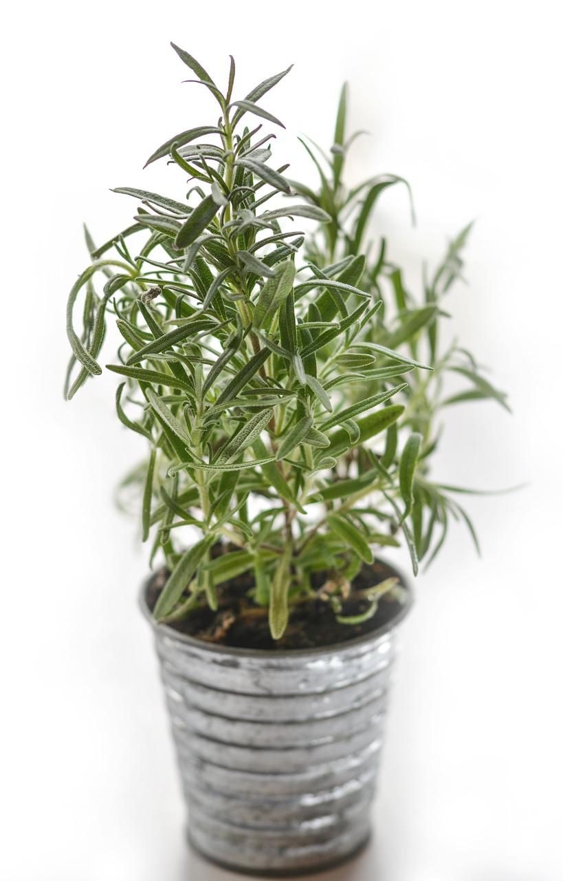 10 Plantas que además de limpiar el aire dan un giro radical a cualquier casa