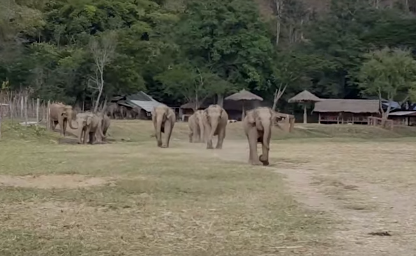 Unos elefantes se viralizan al ver a un hombre montado en un tractor