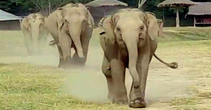 elephant runs to say hi to truck driver featured