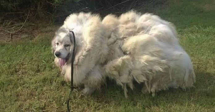 encontraron a este perro abandonado increible transformacion banner