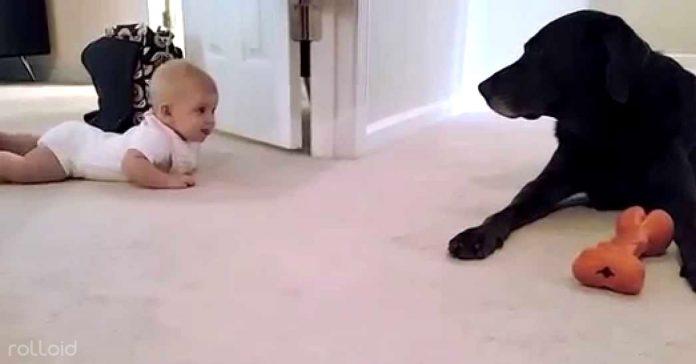 este bebe aprende a gatear y mira como le felicita su perro