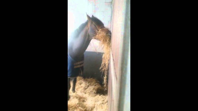 """Un caballo demasiado """"generoso"""" se viraliza al ser pillado por las cámaras"""
