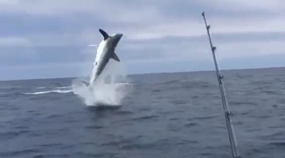 Los tiburones parece que básicamente pueden volar y estamos todos condenados...