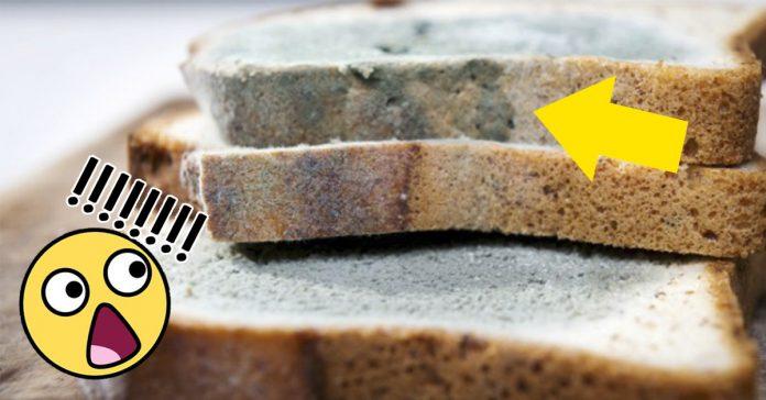 moho en el pan banner