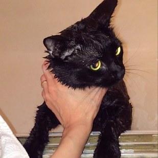 Salem, el gato purpurina.