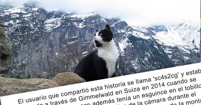se quedo atrapado en la montana con un esguince en el tobillo por suerte este gato le guio de vuelta al valle banner