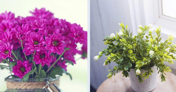 tipos plantas feliz