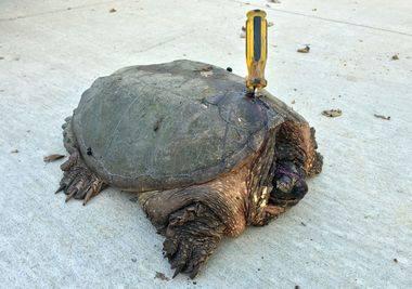 Todo el mundo ignoró a esta gigantesca tortuga herida. Pero entonces esta pareja hizo lo que nadie más habría conseguido...