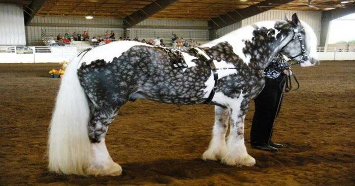 24 caballos con los colores mas increibles y bellos que hayas visto nunca banner