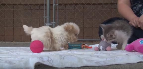 Un cachorrito y su diminuto gatito se vuelven los reyes de las redes viralizándose en vídeo