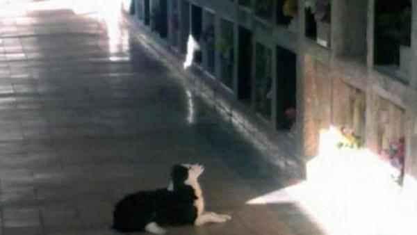 Este perro va al cementerio todos los días para visitar la tumba de su dueño